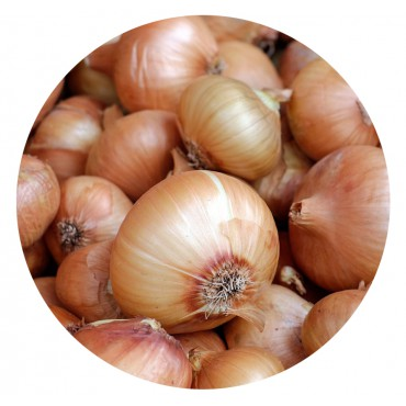 Cebolla Grano de Oro (Kg)